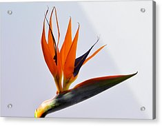 Jewel Of The Tropics. Acrylic Print by Terence Davis