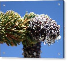 Jeweled Pinecone Acrylic Print