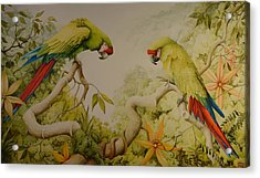 Jewels Of The Rain Forest  Military Macaws Acrylic Print