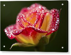 Acrylic Print featuring the photograph Jewels by Priya Ghose
