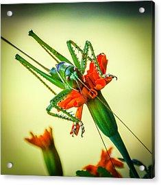 Jiminy Cricket Acrylic Print by Wally Taylor