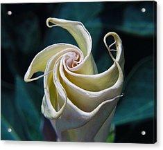 Jimsonweed Flower Spiral Acrylic Print