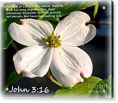 John 3-16/dogwood Legend Acrylic Print by Kathy  White