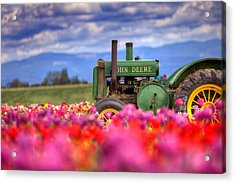 John Deere In The Tulips Acrylic Print