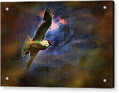 Johnathon Livingston Seagull Acrylic Print