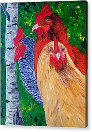 John's Chickens Acrylic Print