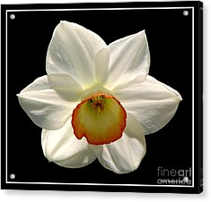 Acrylic Print featuring the photograph Jonquil 1 by Rose Santuci-Sofranko