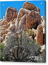 Joshua Tree - 05 Acrylic Print by Gregory Dyer