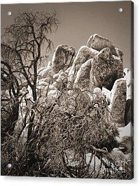 Joshua Tree - 07 Acrylic Print by Gregory Dyer