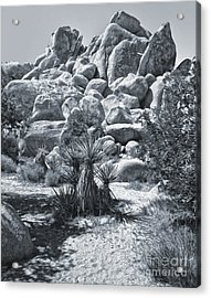 Joshua Tree - 09 Acrylic Print by Gregory Dyer