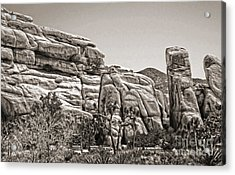 Joshua Tree - 11 Acrylic Print by Gregory Dyer
