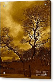 Joshua Tree Acrylic Print by Q's House of Art ArtandFinePhotography
