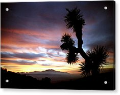 Joshua Tree At Sunset Acrylic Print by Jetson Nguyen