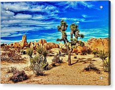 Acrylic Print featuring the photograph Joshua Tree by Benjamin Yeager