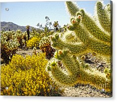 Joshua Tree Cholla Cactus Garden Acrylic Print by Gregory Dyer