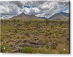 Joshua Tree Forest In Arizona Acrylic Print by Willie Harper