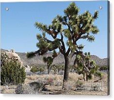 Joshua Tree National Park 6 Acrylic Print by Deborah Smolinske