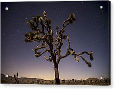 Joshua Tree Night Acrylic Print