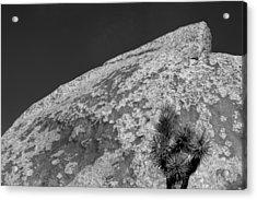 Joshua Tree Textures Acrylic Print by Peter Tellone