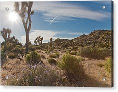 Joshua Tree Using A Tripod Acrylic Print