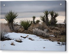 Joshua Trees And Snow Acrylic Print by Pamela Schreckengost