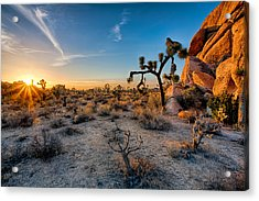 Joshua's Sunset Acrylic Print by Peter Tellone