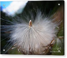 Acrylic Print featuring the photograph Journey Into New Life by Agnieszka Ledwon
