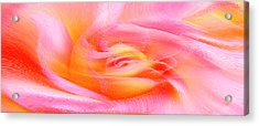 Joy - Rose Acrylic Print