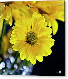 Joy Acrylic Print by Scott Pellegrin