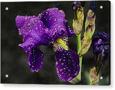 Floral Tears Acrylic Print by Renee Anderson