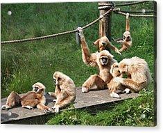 Joyful Monkey Family Acrylic Print