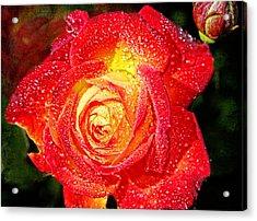 Joyful Rose Acrylic Print by Mariola Bitner