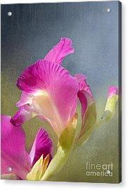 Joyously Pretty Acrylic Print by Kathi Mirto