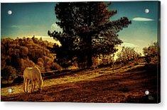 Springtime California Landscape Acrylic Print