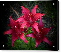 July Lilies Acrylic Print by Elaine Franklin