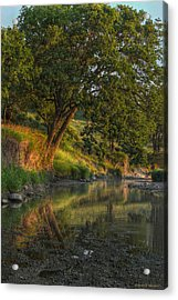 July Morning Along The Creek Acrylic Print by Bruce Morrison
