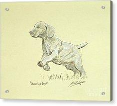 Jump Of Joy Acrylic Print by John Silver