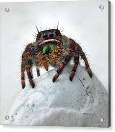 Jumper Spider 2 Acrylic Print