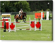 Jumping Canadian Fence Acrylic Print