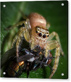 Jumping Spider 3 Acrylic Print