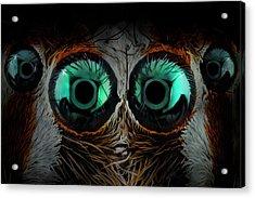Jumping Spider Eyes Acrylic Print