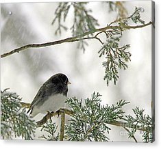 Acrylic Print featuring the photograph Junco In Snowstorm by Paula Guttilla