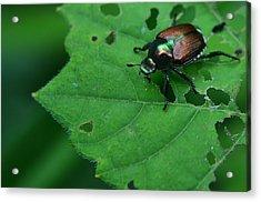 June Bug 1 Acrylic Print by Jeffrey Platt