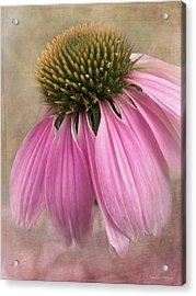 June Coneflower Acrylic Print
