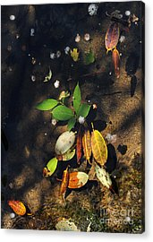 June Gathering 2 Acrylic Print by Gregory Arnett