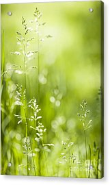 June Green Grass  Acrylic Print by Elena Elisseeva