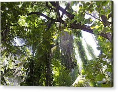 Jungle Canopy Acrylic Print