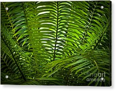 Jungle Fern Acrylic Print
