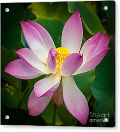 Jungle Garden Flower Acrylic Print