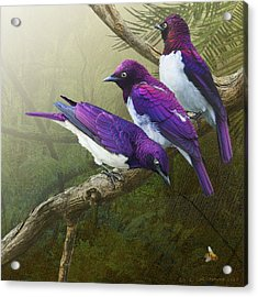 Jungle Mist -amethyst Starlings   Acrylic Print by R christopher Vest